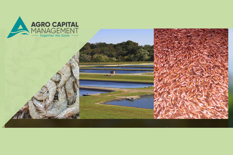Agro Capital Management
